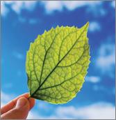 Leaf that symbolizes EP Platinum Recycling