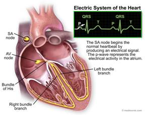Hearts electrical System Image